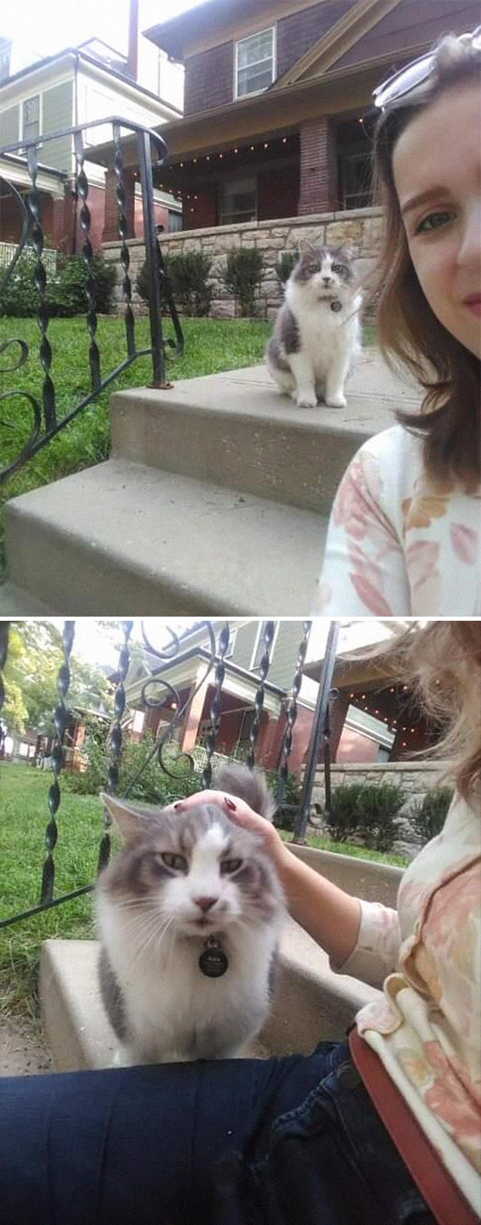 I Met The Cat Of My Dreams Today Named Alex. Pretty Sure He Was A Maine Coon Based On His Sweet Puppy Dog Demeanor. He Demanded Attention And Would Follow Me If I Continued On My Walk. I Was Absolutely Smitten With Him. Please Peruse