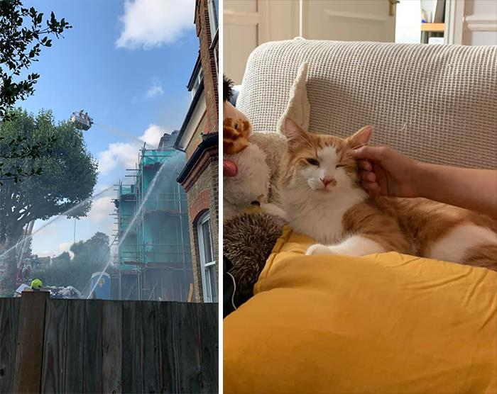The Neighbour's House Caught Fire And A 10 Year Old Boy Came Out Of The House Carrying His Cat Yoda. So We Welcomed Him And His Mother Into Our House. Yoda Took Over The Flat And Is An Absolute Sweetheart.