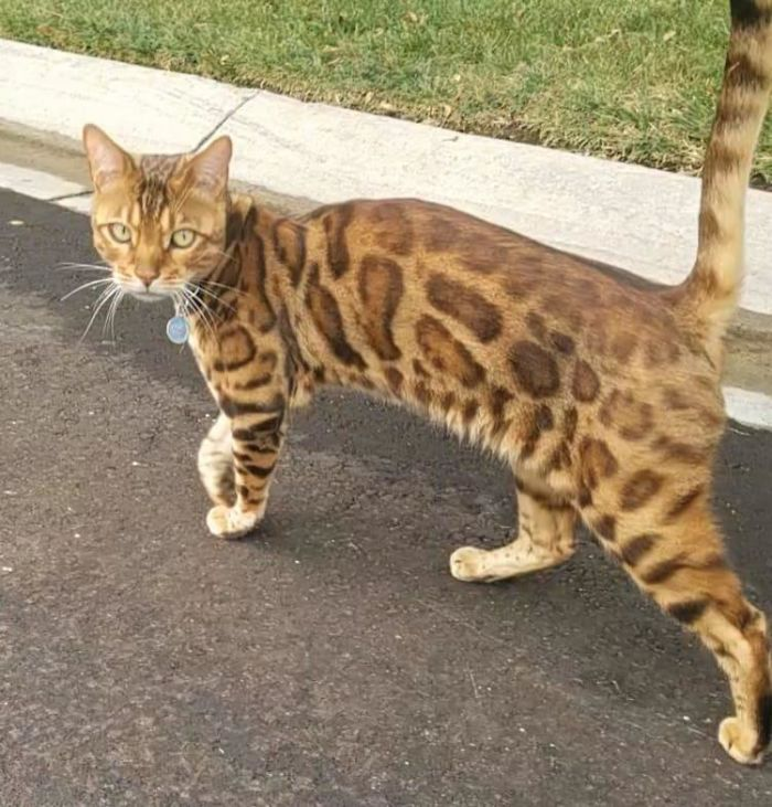 Saw This Beautiful Boy On A Walk. He Was Also Walking, But In The Opposite Direction. He Greeted Us Warmly, But Only Gave Us 30 Seconds Of His Time Before He Continued On His Walk!