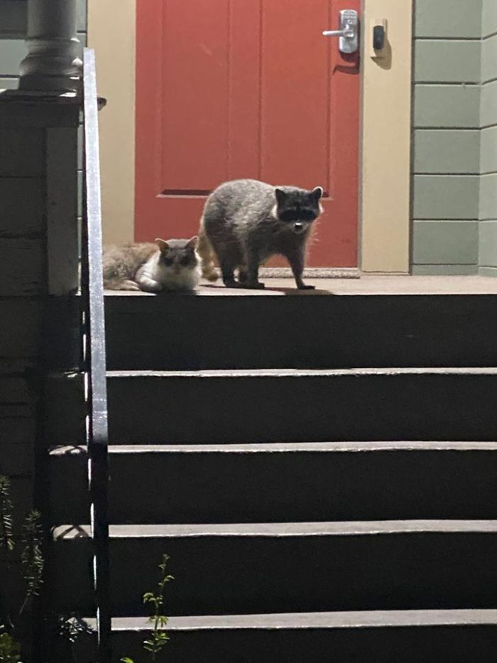 The Smoke Has Cleared Up A Little Bit Here In The Bay Area, So I Went Out For A Walk And Spotted These Two Buddies Enjoying The Night Air Together.