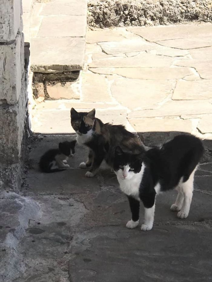 Don't Pspsps To Me Or My Son Or My Wife Ever Again. 🐱cats At A Local Museum In Ioannina Greece.