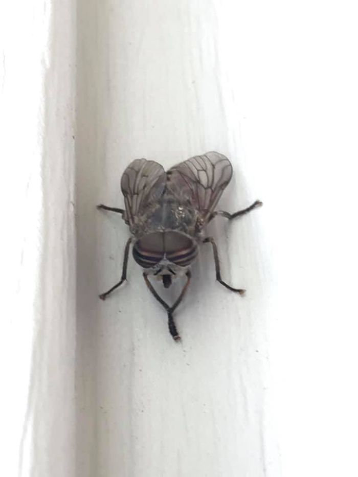 I Feel Like This Fly And His Goatee Are Plotting My Demise