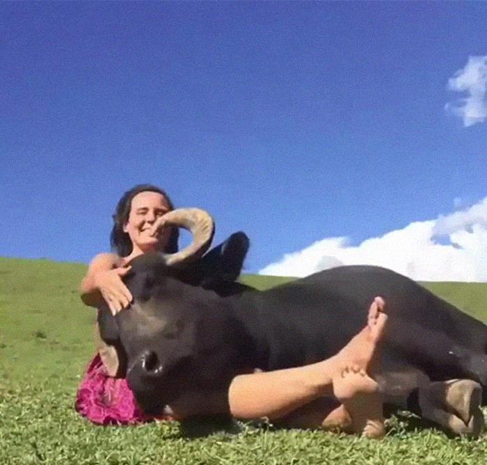 Rescue Cow