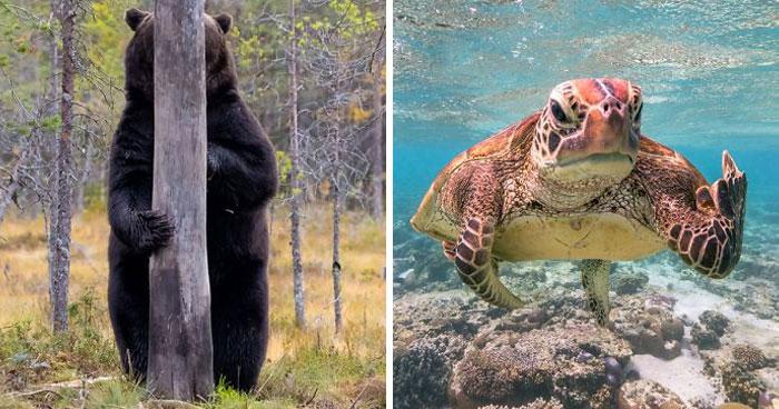 Han sido anunciados los finalistas de los Premios de fotografía Comedy Wildlife 2020 y te harán reír mucho