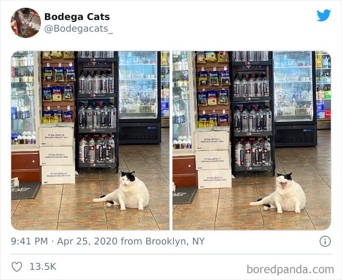 Bodega Cats