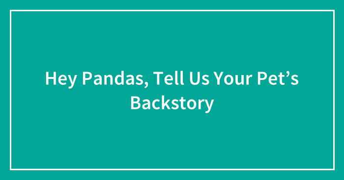 Hey Pandas, Tell Us Your Pet's Backstory (Ended)