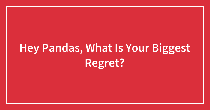 Hey Pandas, What Is Your Biggest Regret? (Ended)