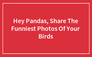 Hey Pandas, Share The Funniest Photos Of Your Birds
