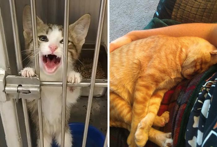 40 Fotos muy reconfortantes de mascotas rescatadas en el mes de Septiembre