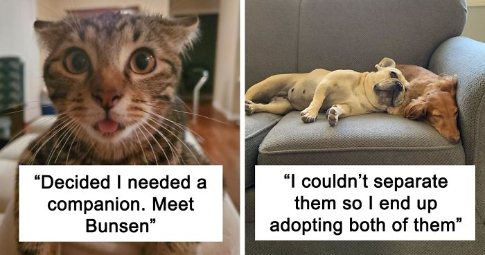 74 Of The Most Wholesome Rescue Pet Photos Of The Month (September Edition)