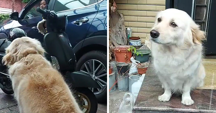Dog Doesn't Want Owner To Go To Work, Gives Him The Saddest Of The 'Sad Eyes'