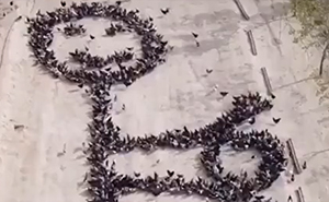Someone 'Teams Up' With Real-Life Birds To Create A Huge Drawing On The Street