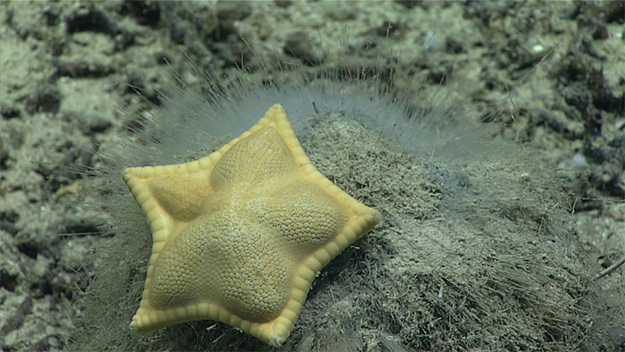 This Forbidden Ravioli Is Actually A Sea Star