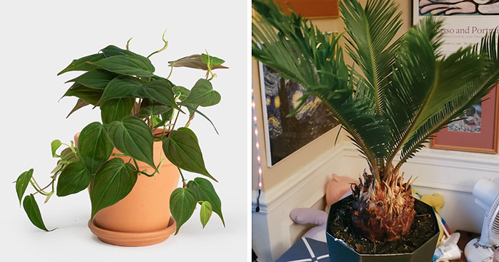 20 Indoor Plants For People Who Tend To Kill Them Off By Accident