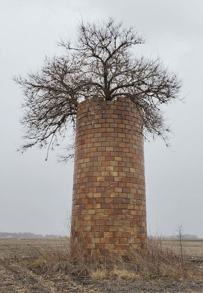 This Tree Grew Inside An Old Silo And Finally Made It To The Top!