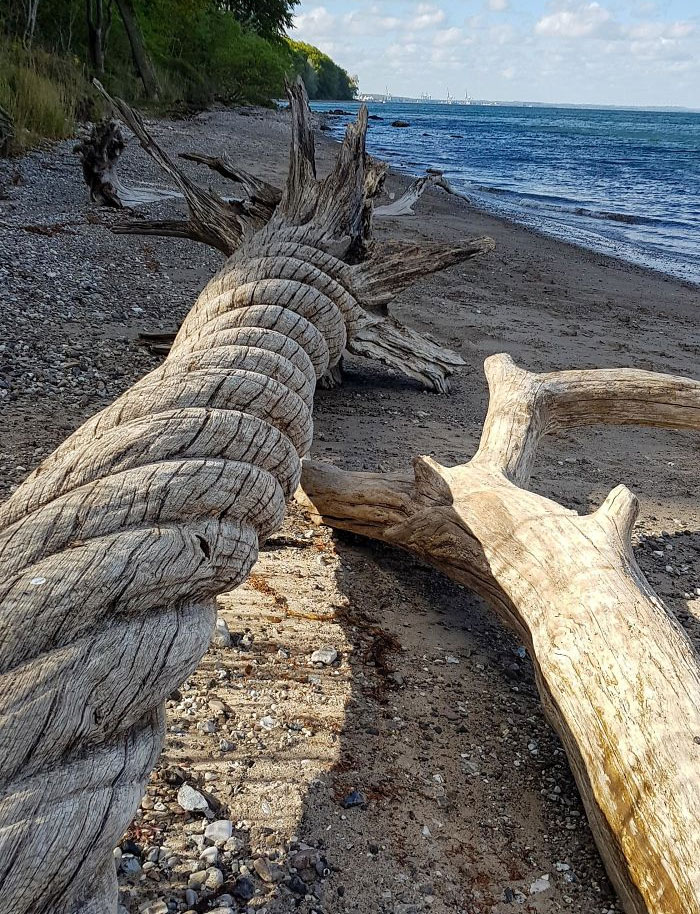 This Twisted Driftwood I Found On The Beach