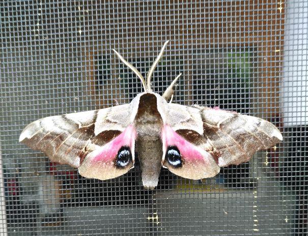 moth-5f6b398d4da6d.jpg
