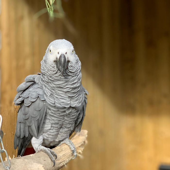 Parrots Get Removed From Public View At A Wildlife Park After Teaching Each Other How To Swear During Quarantine