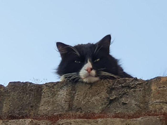 My House Not My Cat