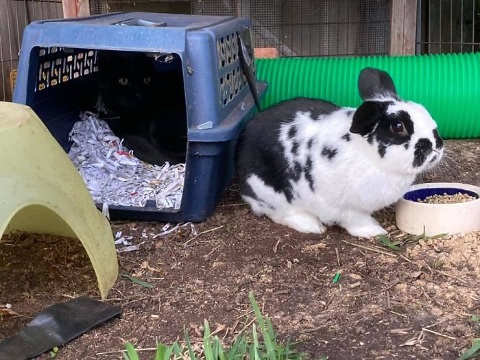 This Is My Rabbits House, He Doesn't Have A Cat