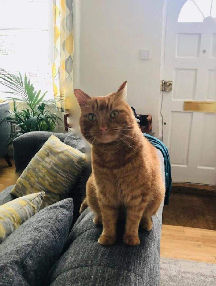 """My House, Not My Cat! She Silently Followed Me Through The Front Door, Then Jumped On The Sofa. Took Me By Complete Surprise. No Collar, So I Decided To Call Her Miss Pring, As She Made The Loudest """"Prrringg"""" Noise To Get My Attention!"""