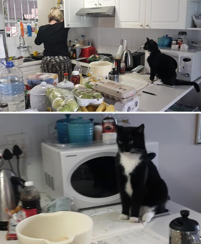 This Is My Mom In Her Kitchen. She Doesn't Own A Cat