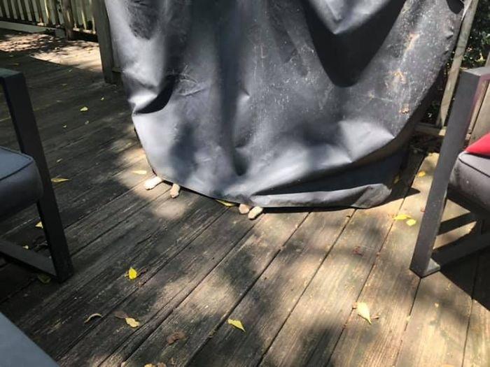 Not My Cat, Sleeping Under My Grill