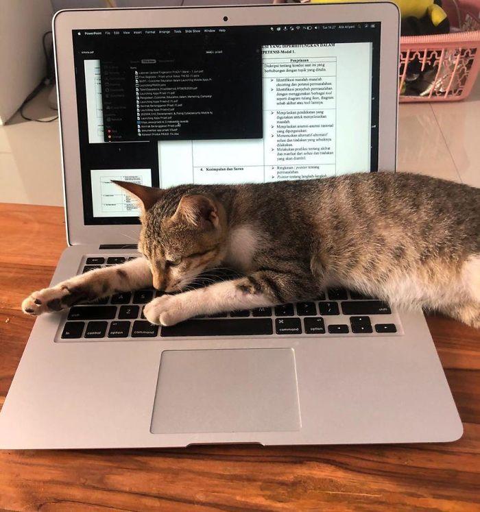 My Laptop, Not My Cat