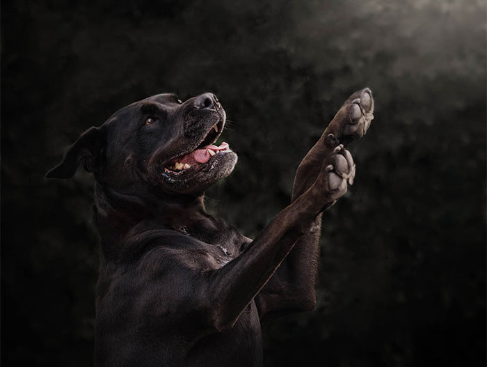 Black Animals Are Awesome, Yet They Are Often Last To Get Adopted, My Photo Project Proves How Cool They Are (22 Pics)