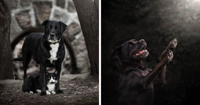 Black Animals Don't Get Adopted As Often As Others, Which Is Why I Made A Photoshoot Focusing Only On Them (22 Pics)