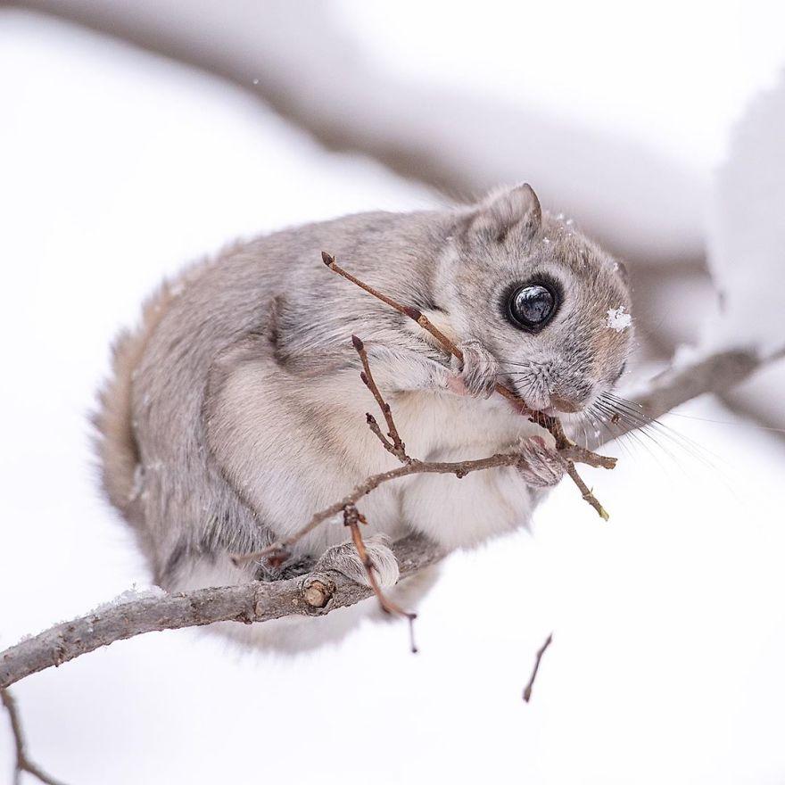 Pokemon-Japanese-Flying-Squirrels-Handa-Natsumi