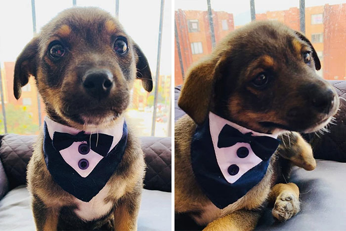 This Pup Was Dressed Up In A Tuxedo To Greet His New Family, Who Decided Not To Show Up