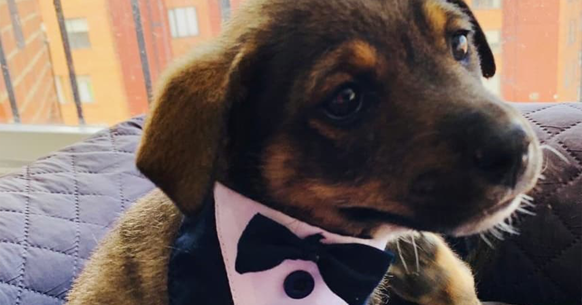 This Puppy Got All Dressed Up For His New Owners Just To Be Stood Up At The Last Moment