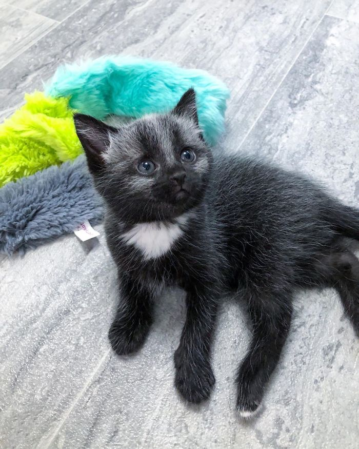 This Adorable Tiny Kitten Found On The Side Of The Road Surprisingly Has A Uniquely-Colored Coat (30 Pics)