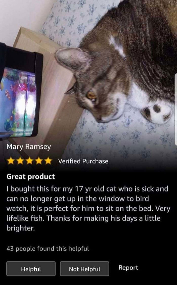 An Elderly Cat Who Can No Longer Bird Watch Receives A Fish Tank Full Of Fake Fish To Watch From The Comfort Of His Bed
