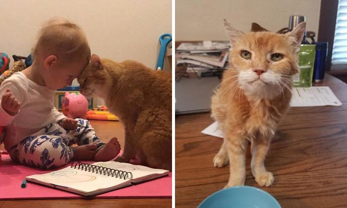 40 Encantadoras fotos de gatos ancianos haciendo lo que mejor se les da