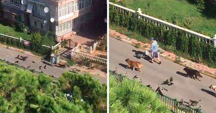 Woman Records This Stranger Leading A Parade Of Dogs, Cats, And Birds Down The Street, And The Scene Looks Magical