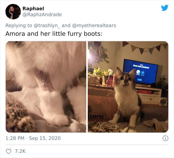 Surgery-Cats-Photo