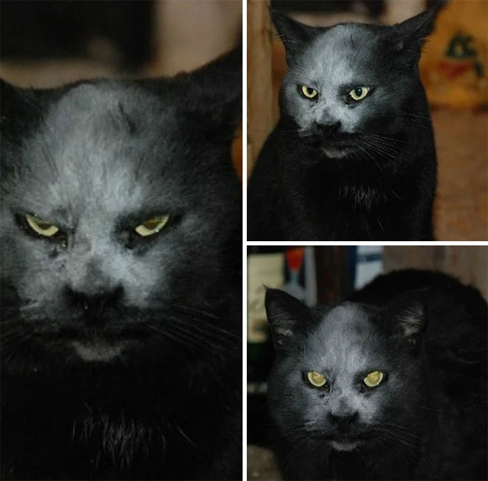 He Is Not A Devil. He Is Just A Cat In Flour