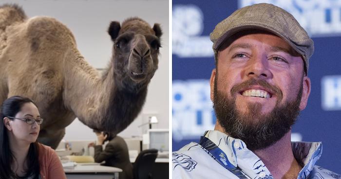Hump Day Camel—Chris Sullivan