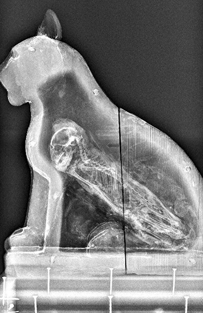 An X-Ray Of An Egyptian Sarcophagus Revealed A Kitten Inside