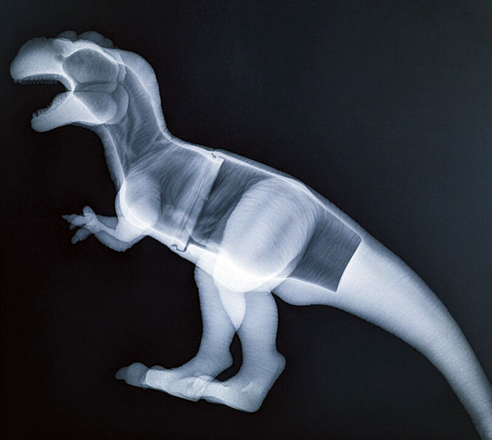My Wife Took Our Cat To The Vet And My Son Told The Vet His Toy Dinosaur Was Feeling Poorly So The Vet Gave It An X-Ray