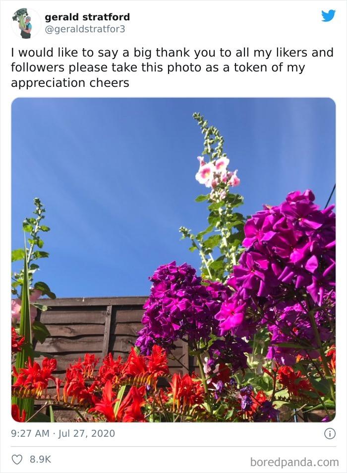 Gardener-Posts-Veggie-Photos-Gerald-Stratford