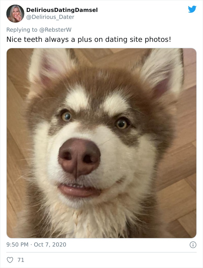 Dog-Profile-Pic-Photo-Dating-Website-Twitter