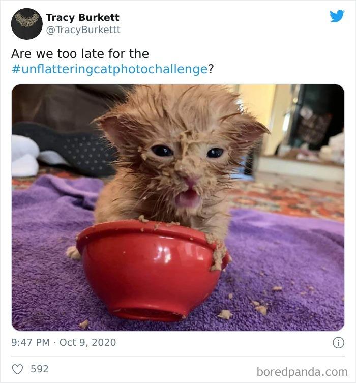 Unflattering-Cat-Photo-Challenge
