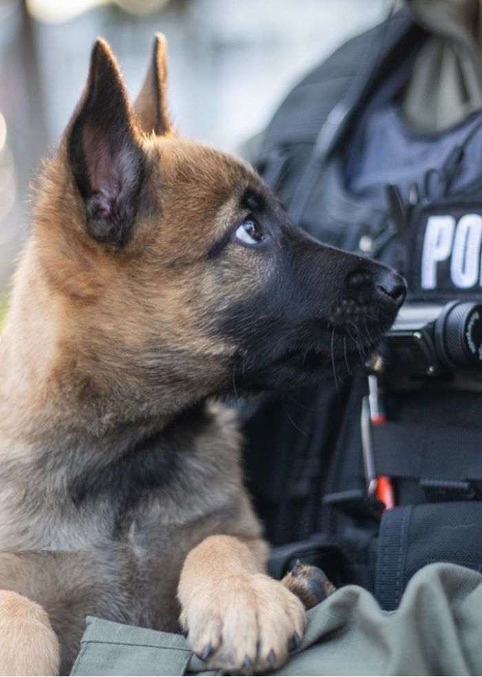 This Good Boy Just Started Training To Become A Police Dog In Estonia And People On The Internet Are Already Proud Of Him