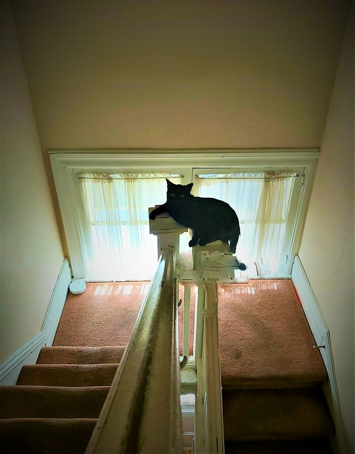 Well Recently My Black Cat, Frankie, Has Been Hanging Out On The Stair Pillars. I... I Don't Know Why, Exactly. Except That He's Pretty Cool With It