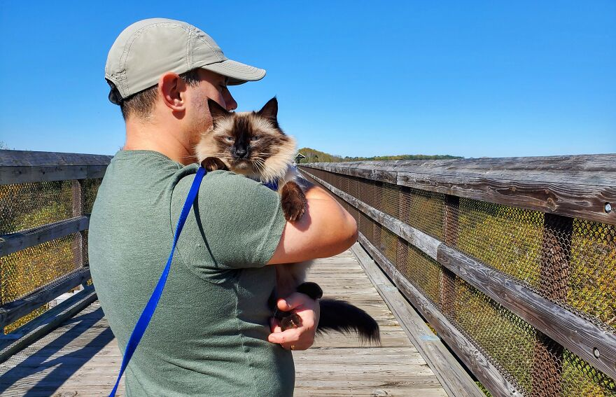 Our Dog-Like Cat Walks On A Leash For His First Mountain Hike!