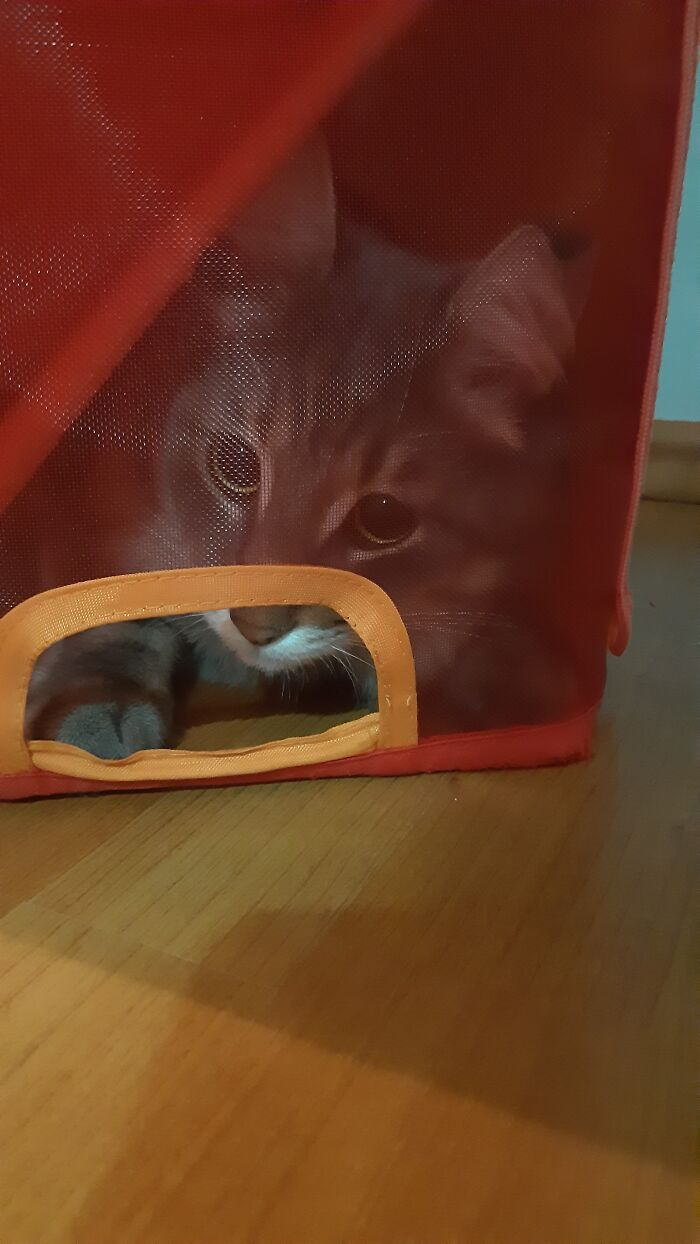 My Cat Really Loves To Get In This Box And Trap Himself. He Plays With The Box For A While And Later He Takes A Nap In The Box. Sometimes I Can't Understand Him... :d