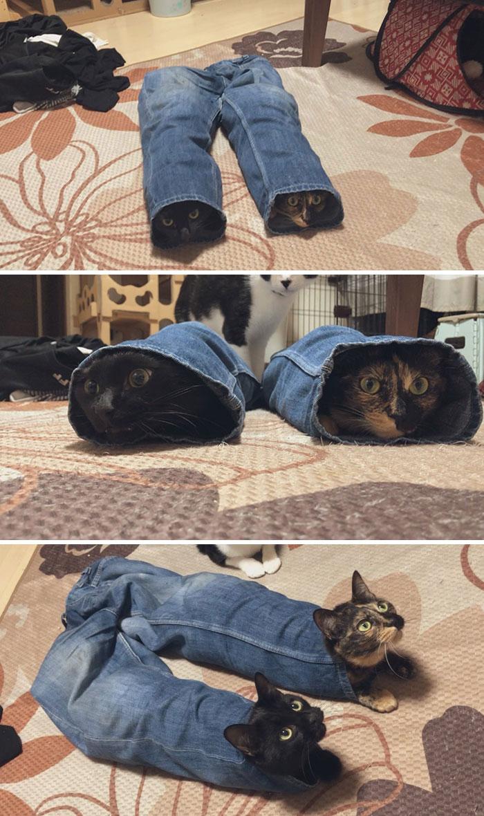 Jeans Cat
